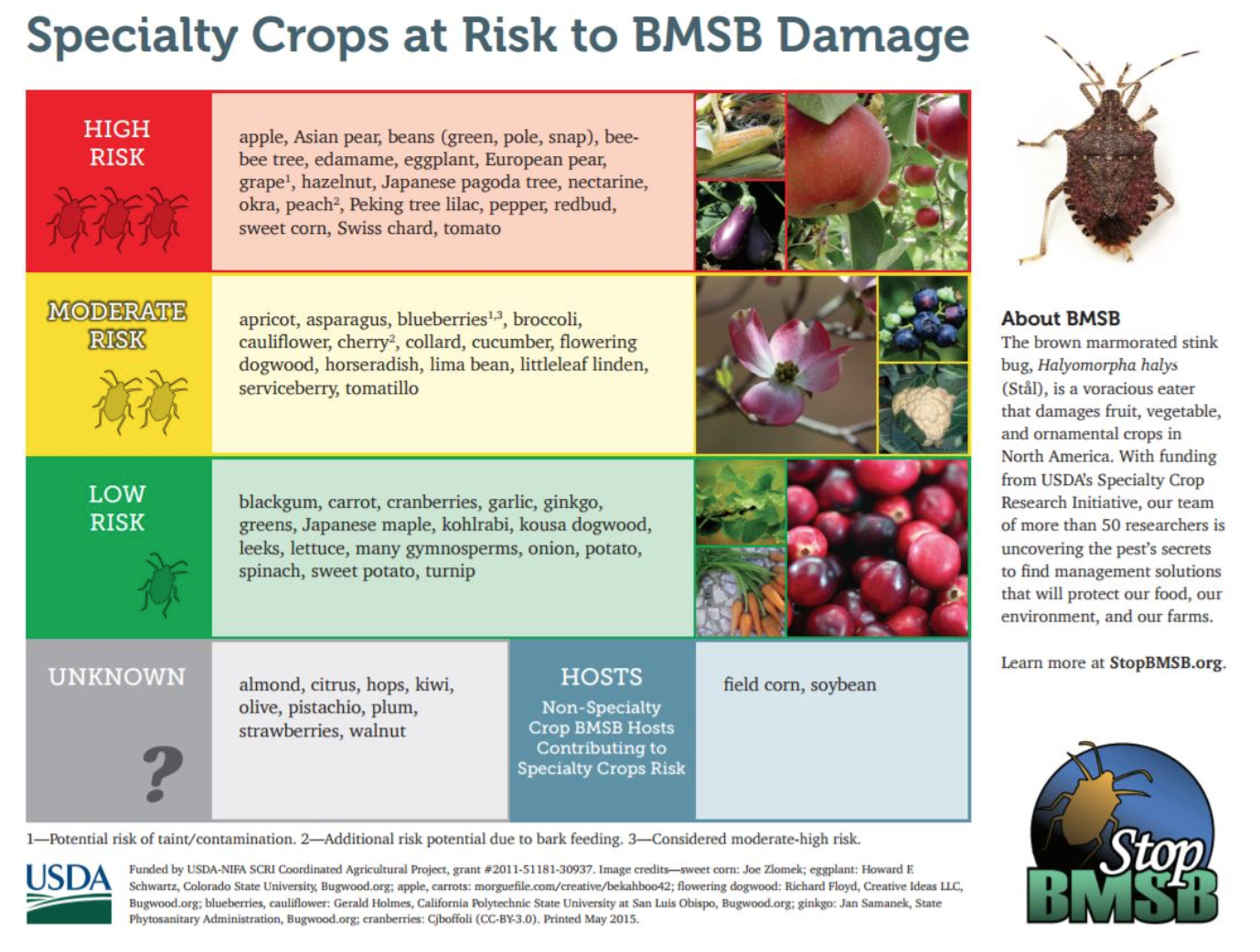 Crops at Risk to BMSB Damage