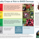Watch Out for the Invasive Brown Marmorated Stink Bug, a Serious Invasive Pest of Field Crops, Fruits, and Vegetables.